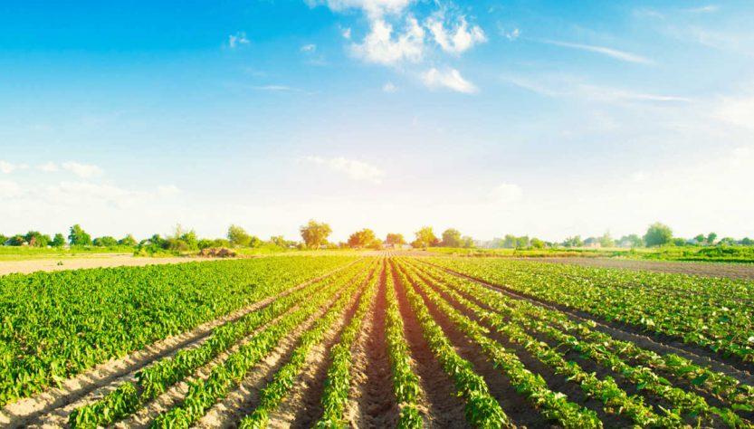 come avviare azienda agricola